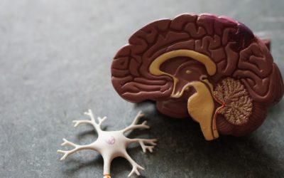 What Happens To Your Brain When You Don't Teach Yourself Anything?